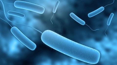 forside-gallery-bakterier-5